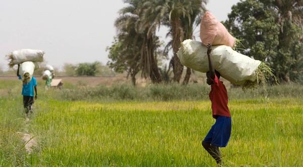 sac-de-riz-sur-tete-paysan